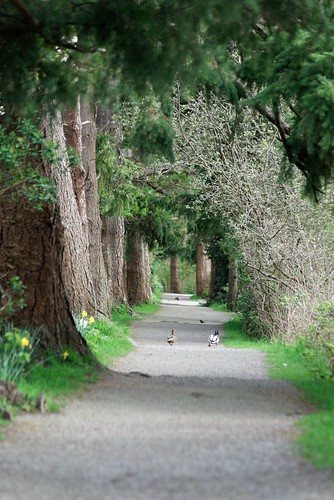 Couple Strolling on the path