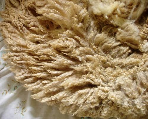 winnie's fleece