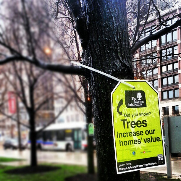 In memory of my favourite neighbourhood tree. #rip #tree #chicago #nuffsaid