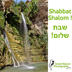 Shabbat shalom everybody ! Picture shot at Ein Gedi natural reserve. More pictures here : http://israelnaturephotography.com/fr/tourisme/sortie-photo-dans-la-reserve-naturelle-dein-gedi/