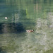 Konigsee-20120918_2482