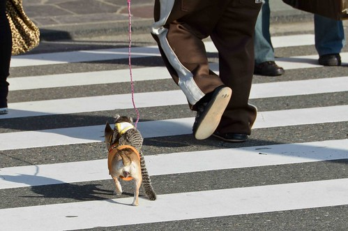 Monkey, Riding a Dog, Crossing the Street