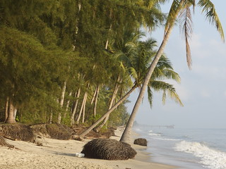 Sand Beach Strand Meer Coconut Palm Tree Thailand Asia Ocean Sea