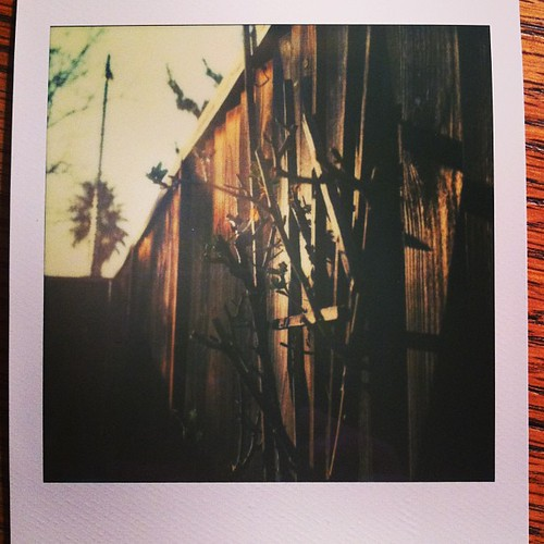 pruned roses on the fence #impossibleproject