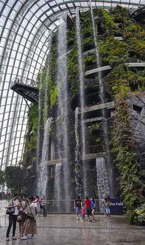 """GARDEN OF THE BAY : """"Cloud Forest"""" (la forêt tropicale) II"""