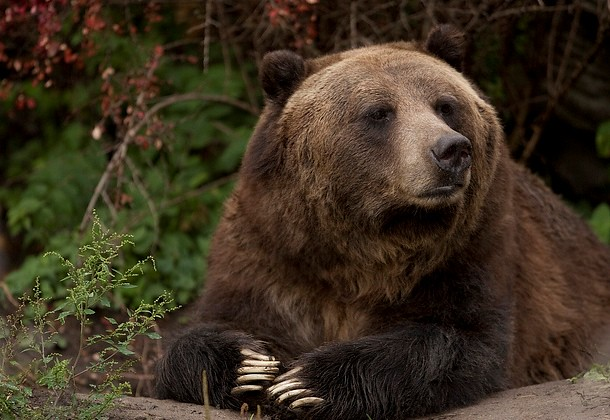 Grizzbear