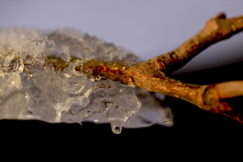 icy twig2