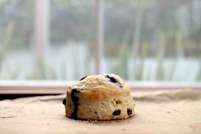 Maple Blueberry Scones | Joy the Baker