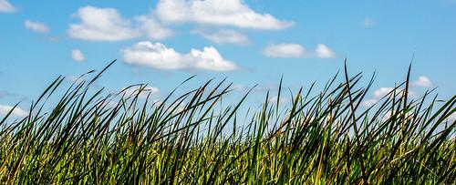 [フリー画像素材] 自然風景, 草原・草, 青空 ID:201303070600