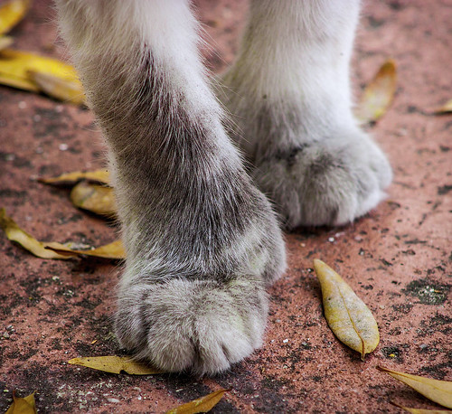 these feet were made for walking.......