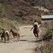 Boy on a horse with machete - Joven con machete en caballo; camino de Zoogocho a Solaga, Districto Villa Alta, Región Sierra Juárez, Oaxaca, Mexico por Lon&Queta