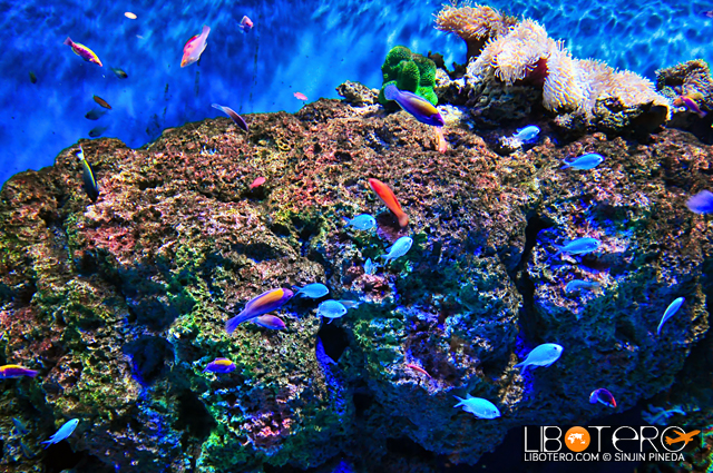 SEA Aquarium Sentosa Singapore