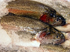 Fresh Rainbow Trout on Ice