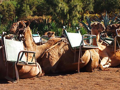 Camel Park El Tanque