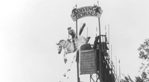 Horse diving off a podium with a girl