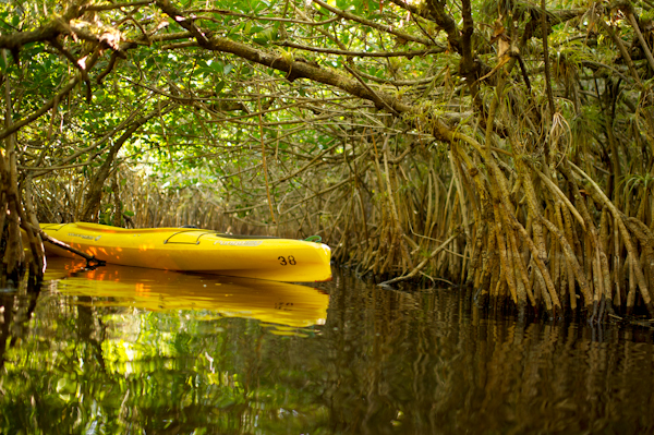 RYALE_Everglades-075