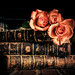 flowers and old books by Sarah Rausch