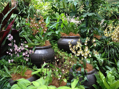 Singapore Orchid Garden -  display