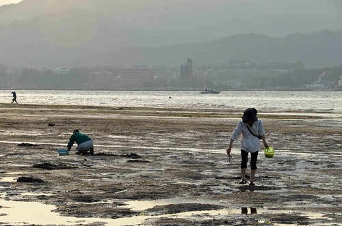 Clam Digging on Miyajima