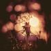 Fairy dreams by Sarah Rausch