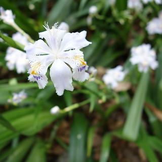 護国神社に群生していた花。名前は知らない。