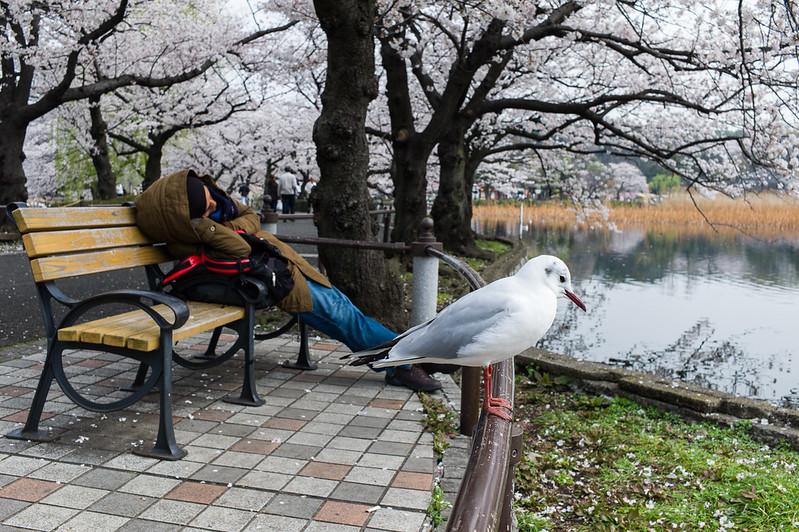 A sleeping man and a bird at Ueno Park, Tokyo