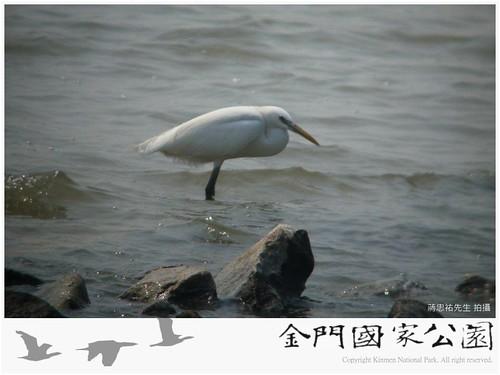 唐白鷺(蔣忠祐拍攝)