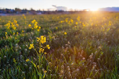 field landscape spring idaho middleton 5dmkii