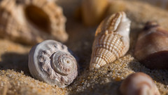 S like Spiral, Shells, Sand, Summer, Sea and Sun