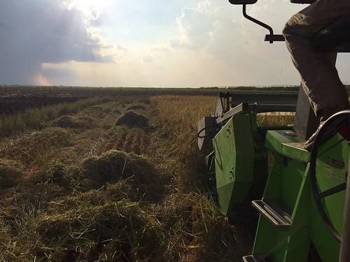 9-14-Rice Trials Keiser-Hardke