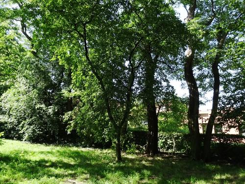 Garten Alma de l'Aigle Robinien