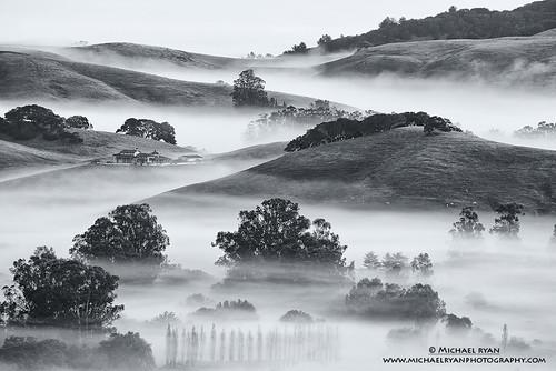 county trees white black fog photography michael mood ryan hill sonoma hills wilson petaluma michaelryanphotography