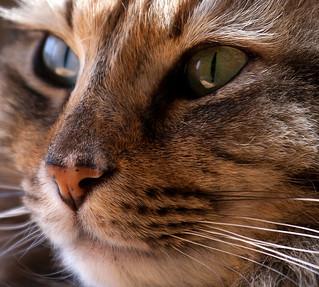 Cat Watching Bird by Ralph Arvesen
