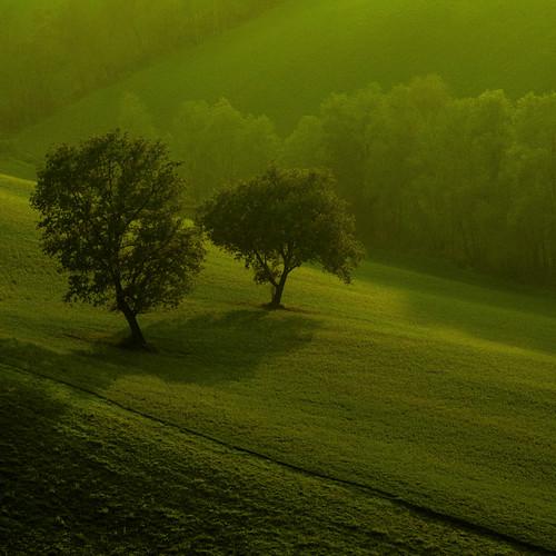 [フリー画像素材] 自然風景, 草原・草, 樹木, 緑色・グリーン ID:201302181200