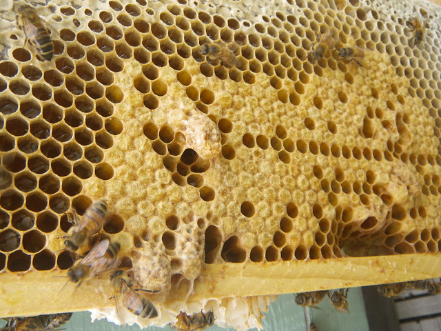 Is it a swarm cell or a supersedure cell? - Beekeeping.isGood