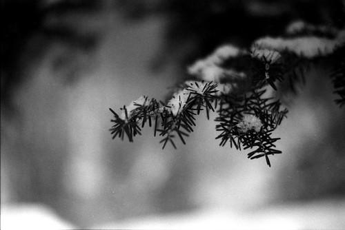 Close-Up Needles