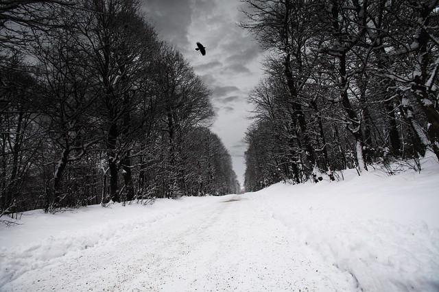 the_crow