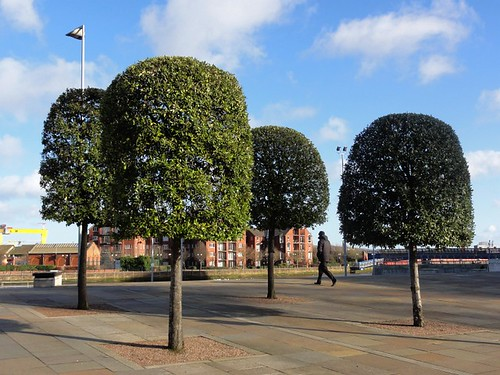 Trees at Layon Place