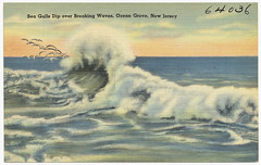 Sea gulls dip over breaking waves, Ocean Grove, New Jersey
