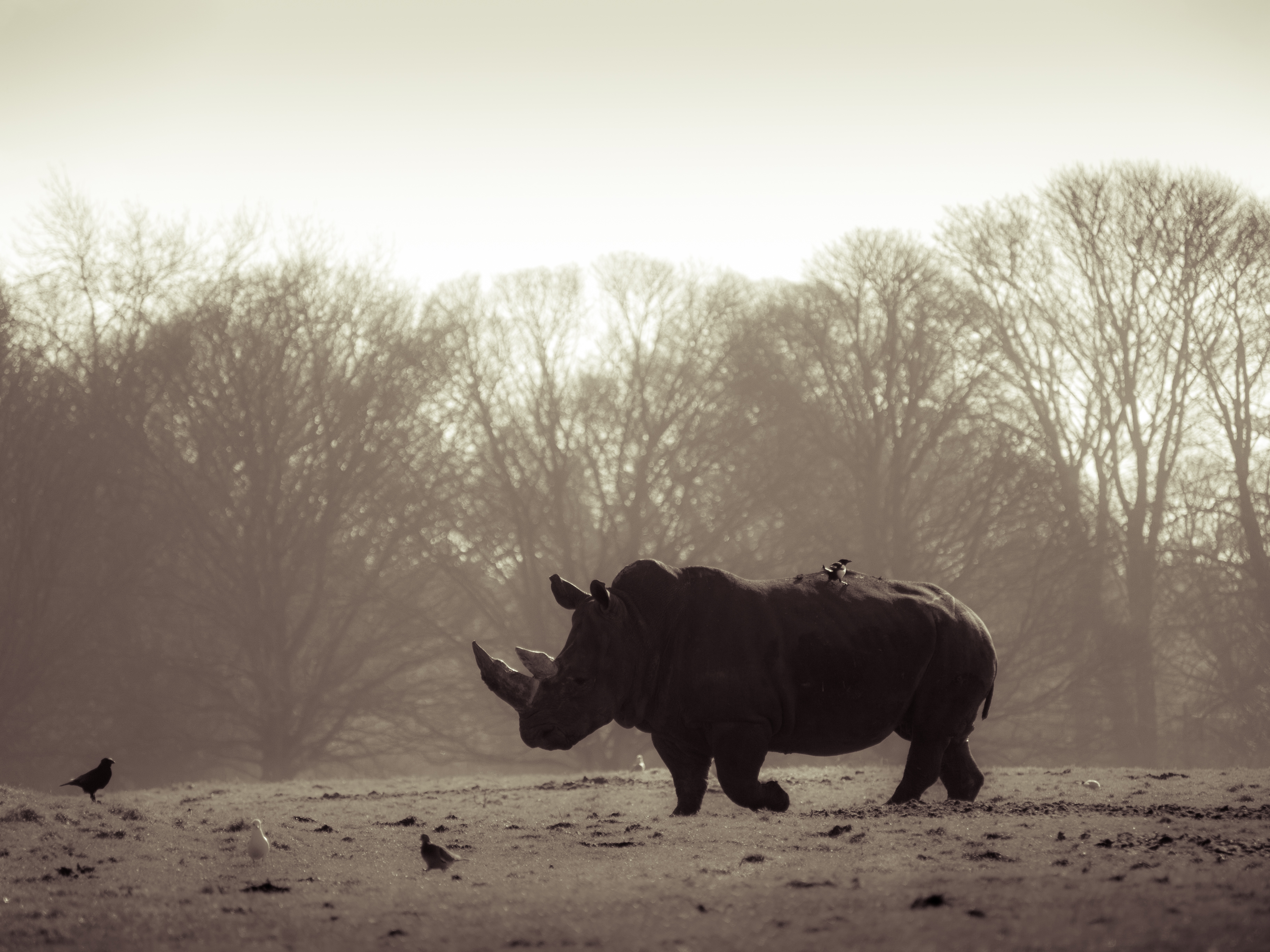 the devastating effects of wildlife poaching one green planet want