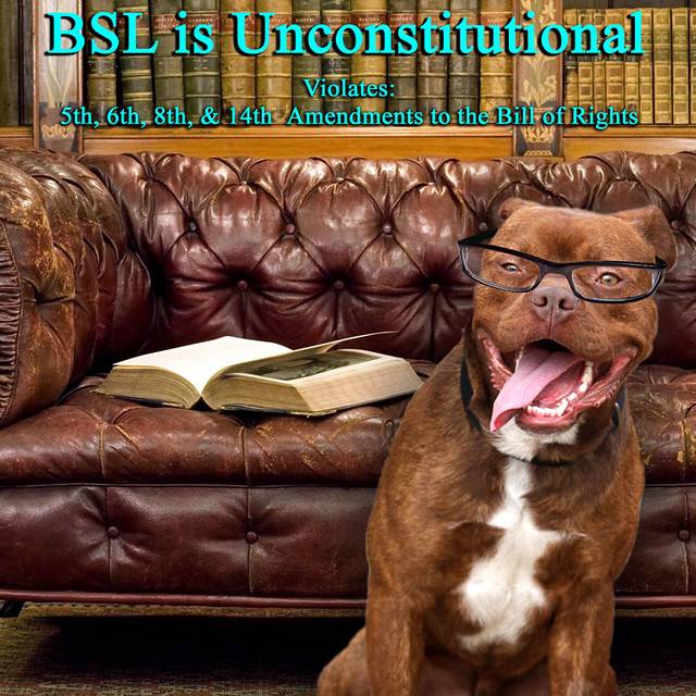 BSL is Unconstitutional, Discrimination against Pit Bull Breed of Dogs