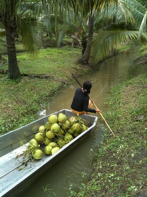 Gathering Cocos
