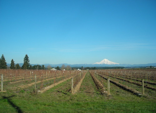 Berry fields and distant stratovolcano
