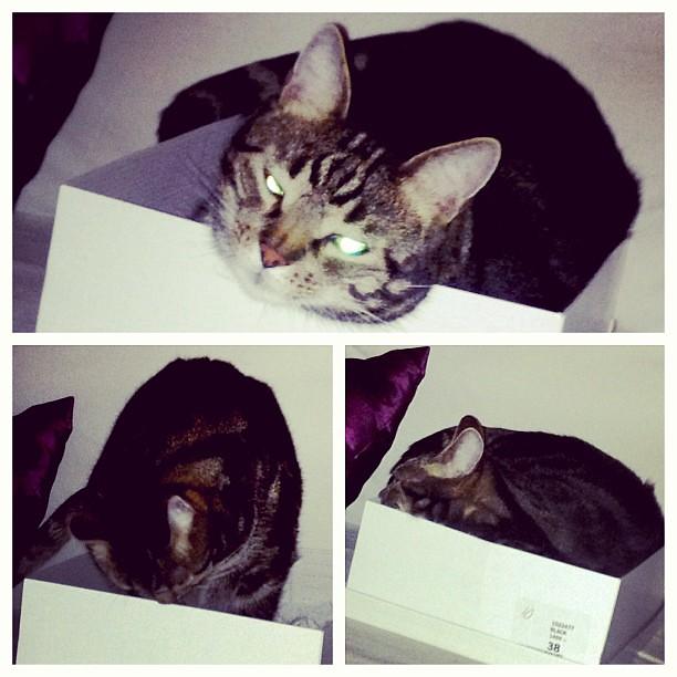 Vampyrkatten och lådan. LÅDAN!