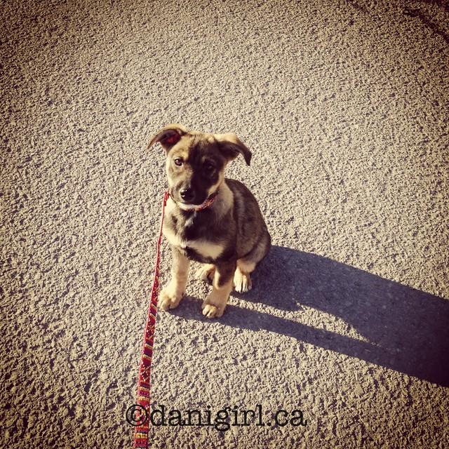 贝拉的第一次漫步
