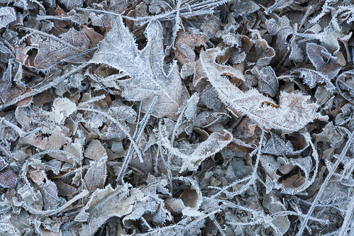 morning autumn white mountains macro forest sunrise leaf flora colorado frost unitedstates rockymountains ridgway uncompahgrenationalforest