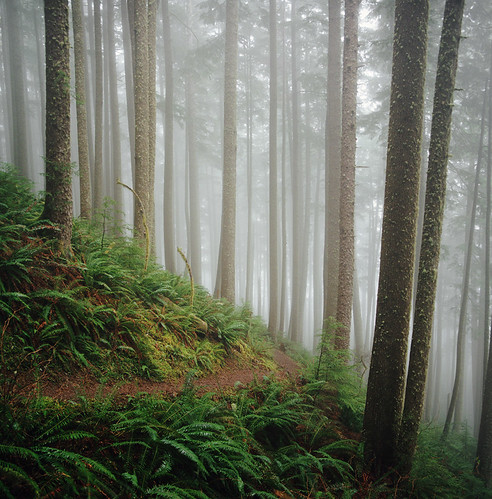 the forest of our fairytales