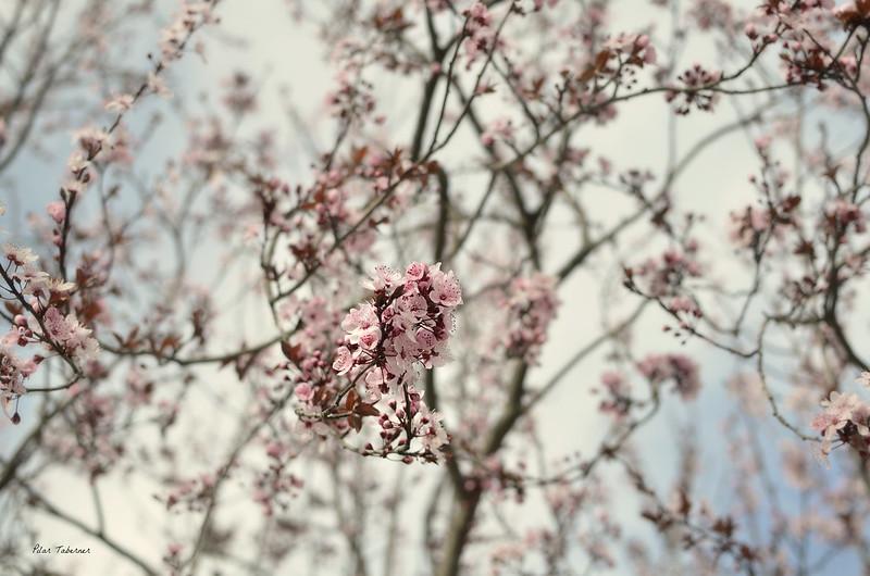 Primavera en El Toboso.