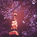 Cherry Blossoms And Tokyo Tower At Night by Masashi Wakui