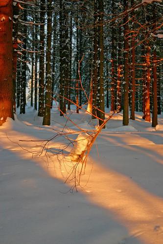 trees winter snow sunrise canoneos300d beskydy mygearandme mygearandmepremium mygearandmebronze mygearandmesilver mygearandmegold thebeskidsmountains